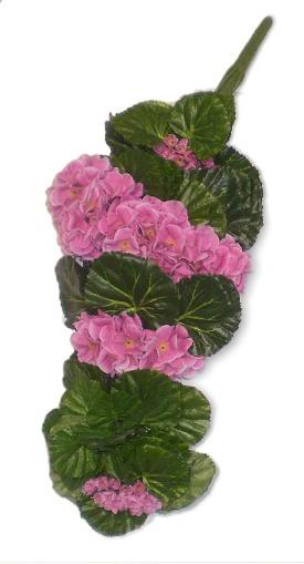 Muškát pnoucí 50cm růžový/složený